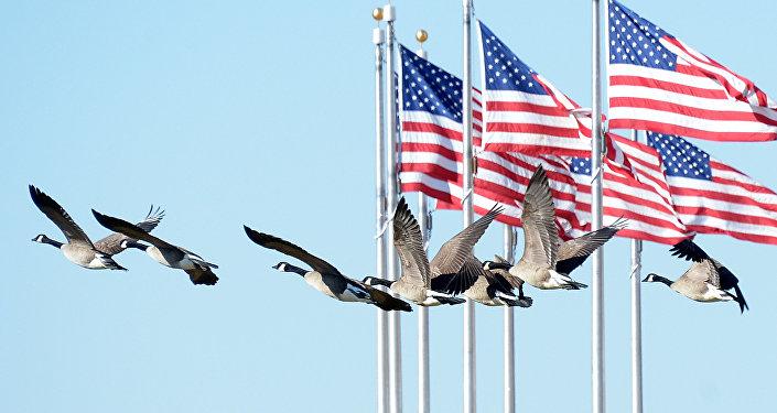 Стая гусей летают на фоне флага США. Архивное фото