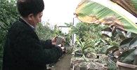 Садовод из Кадамжая вырастил оливки, бананы и пальмы