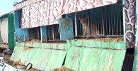 Брошенный частный зоопарк в Гюмри: львы и медведи в голодном заточении