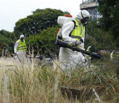 Операции по уничтожению комаров переносчиков вируса Зика. Архивное фото
