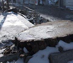 Пень от вырубленного дерева возле дороги. Архивное фото
