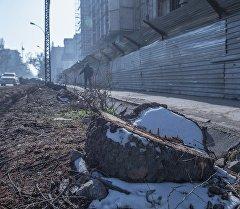 Пень от вырубленного дерева на Чуй-Гоголя. Архивное фото