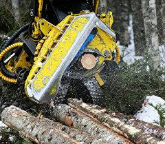 Спиливание дерева. Архивное фото