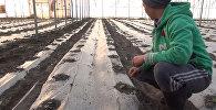 Британиядагы ишин таштап Кыргызстанга келген мекендеш күнөскана ишин к