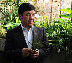 Премьер-министр Темир Сариев Бишкек шаарындагы Энвер Гареев атындагы Ботаникалык бакчасында.