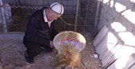 Секрет изготовления конского седла рассказал 82-летний мастер из Сузак