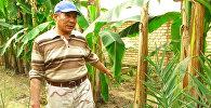 В Кыргызстане выращивают бананы и кофе. Кадры из ноокенской теплицы