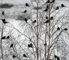 Птицы на дереве. Архивное фото