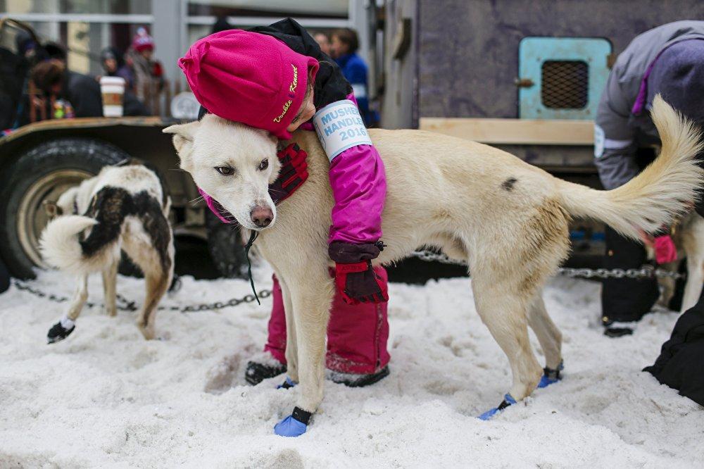 Гонки на собачьих упряжках Айдитарод в Аляске