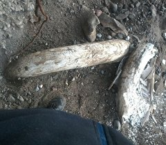 Ысык-Көл облусунун Ак-Суу районундагы Жыргалаң суусунун боюндагы жардан мамонтко окшош байыркы жандыктын сөөгү