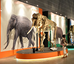 Кости мамонта в музее. Архивное фото