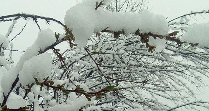 Осадки привели к тому, что наблюдаются заморозки в разгар цветения главной культуры, приносящей доход сельчанам района