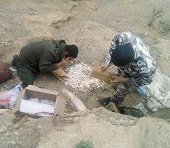 Археологи на месте раскопки доисторического животного, похожего на мамонта, найденного в Иссык-Кульской области. Архивное фото