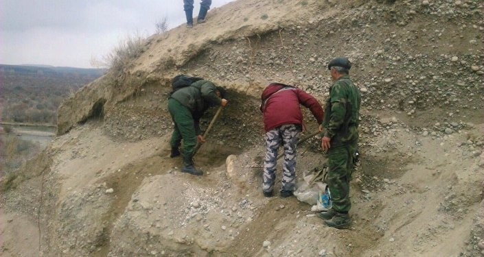 Кыргызстандын окумуштуулары көлдүк мамонттун азуу тишин баш сөөгү менен казып чыгарышты.