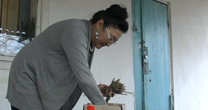 Биолог раскрыла секрет кыргызской виагры, заинтересовавшей немцев