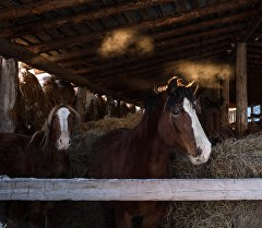Лошади на стойле. Архивное фото