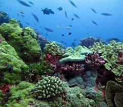 Заповедник островов Феникс. Архивное фото