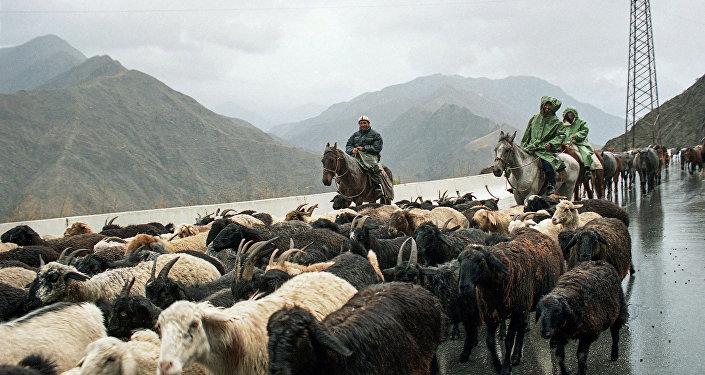 Перегон овец. Архивное фото