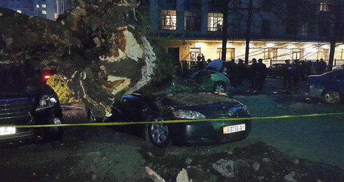 Очевидец рассказала, как в Бишкеке дерево придавило машину с человеком