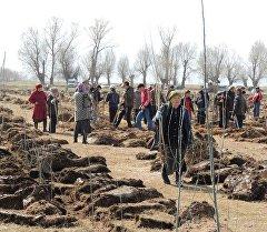 Люди во время высадки 9 тысяч саженцев серебристого тополя в селе Липенка.