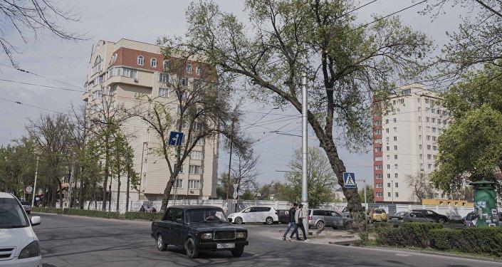 Накренившееся дерево в Бишкеке. Архивное фото