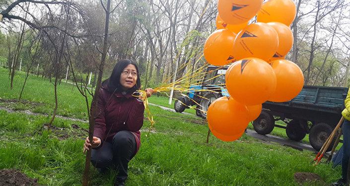 Sputnik Кыргызстан агенттигинин эмгек жамааты бүгүн эртең менен Кара жыгач сейил багына 35 көчөт отургузду