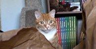 Кот и экзистенциальный ужас