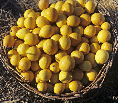 Лимон. Архив