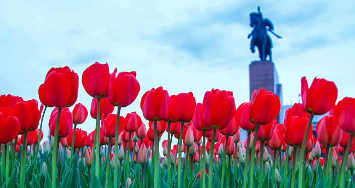 Тюльпаны на клумбах на площади Ала-Тоо.