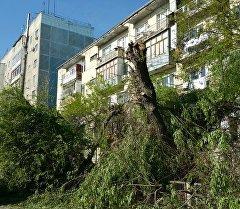Вырубка деревьев в микрорайоне Аламедин-1