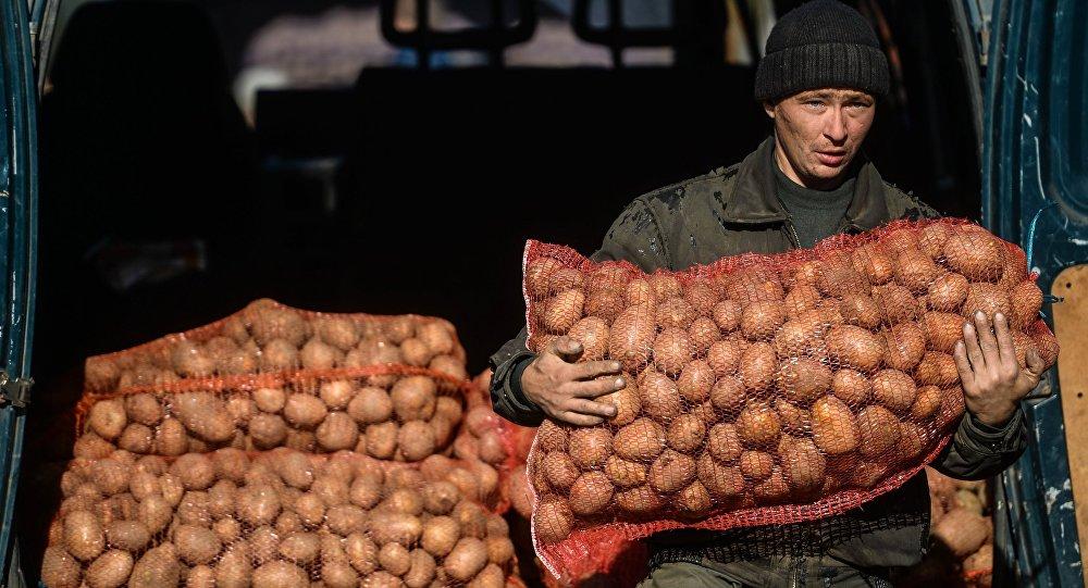 Мужчина несет мешок с картошкой. Архивное фото
