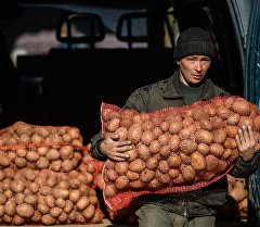 Базарда картошка саткан киши. Архив