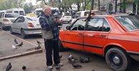 Бишкекские голуби налетели на таксиста, узнав в нем кормильца