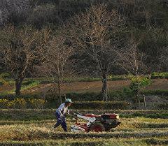 Япониядагы фермер. Архив