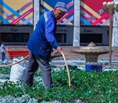 Сотрудник муниципального предприятия поливает цветы на площади Ала-Тоо в Бишкеке. Архивное фото