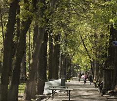 Деревья на бульваре Эркиндик в городе Бишкек. Архивное фото