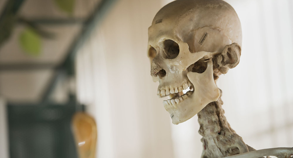 Скелет человека. Архивное фото