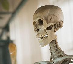 Скелет человека. Архив
