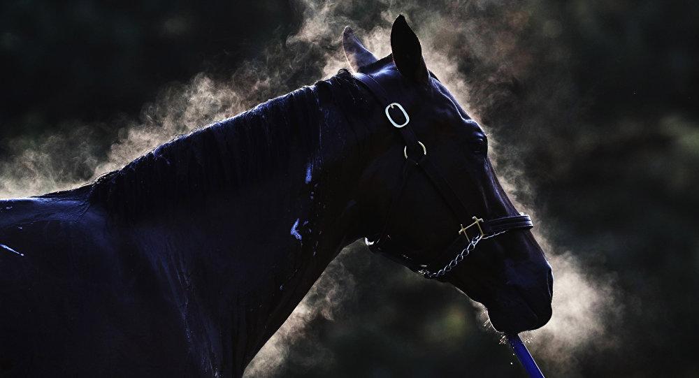 Лошадь. Архивное фото
