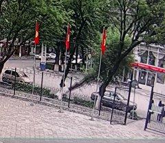 Момент падения дерева на машину в Бишкеке зафиксировала видеокамера