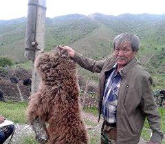 Шкура бурого медведя, изъятые сотрудниками территориального подразделения ГАООСЛХ в Джалал-Абадской области.