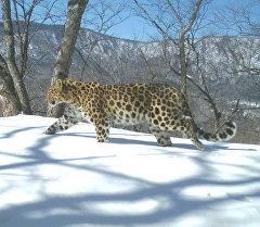 Территория национального парка Земля леопарда в Приморском крае