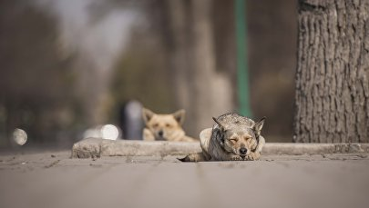 Бездомная собака греется на улице Бишкека. Архивное фото