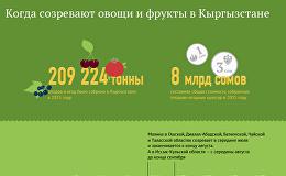 Когда созревают овощи и фрукты в Кыргызстане