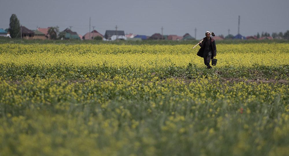 Фермер с кетменем на поле в пригороде Бишкека. Архивное фото