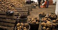 Хозяйство по производству и заготовке овощей в Омской области