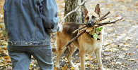 Хозяин играет с собакой в парке. Архивное фото