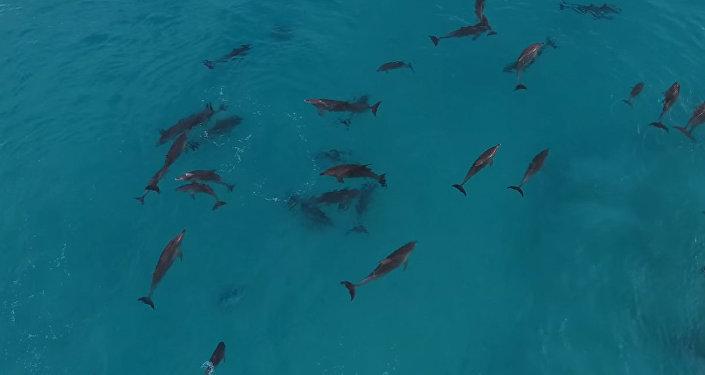 Дельфины ловили волну, как заправские серферы