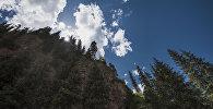Ели на живописном горном ущелье Джеты-Огуз. Архивное фото