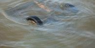 Машина упавшая в воду. Архивное фото